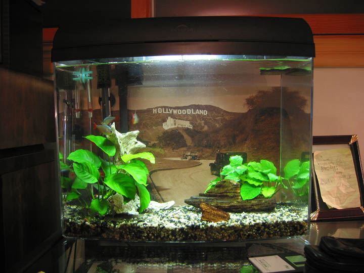 5 gallon fish tank quiet 30 fish tanks aquariums Thirty gallon fish tank