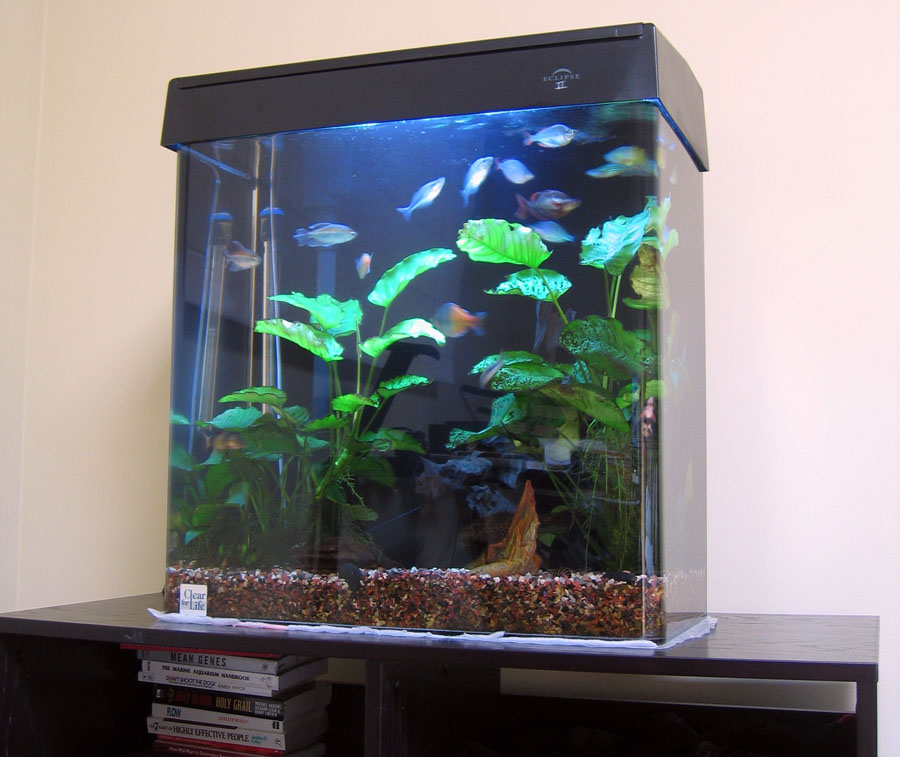 Eclipse 30 gallon fish tank what 39 s your tank history Thirty gallon fish tank